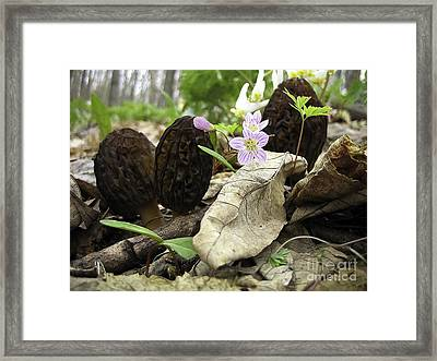 Morels Spring Beauties  And Dutchman's Britches Framed Print