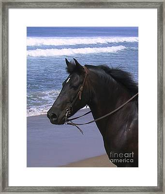 Morgan Head Horse On Beach Framed Print