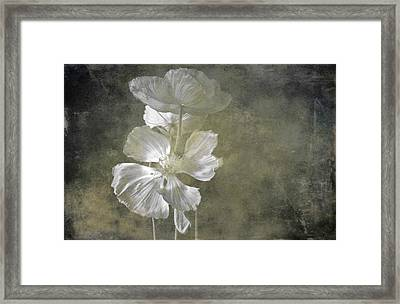 Moring Blooms Framed Print