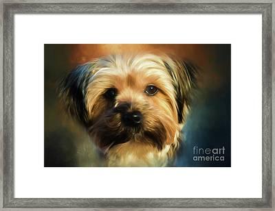 Morkie Portrait Framed Print