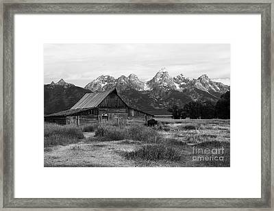 Mormon Row Famous Barn Framed Print by Teresa Zieba