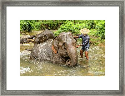 Morning Ablutions 4 Framed Print by Werner Padarin