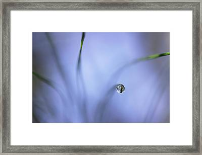 Morning Among The Pine Framed Print by Mike Eingle