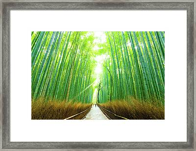 Morning Arashiyama Bamboo Forest People Walking Framed Print