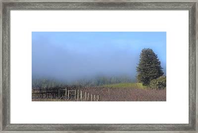 Morning At The Vinyard Framed Print