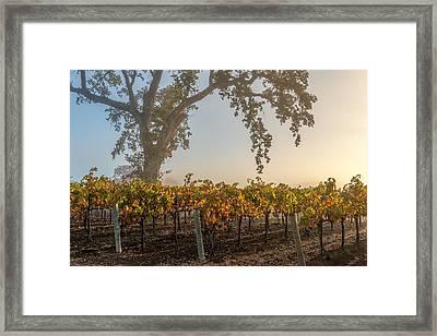 Morning Attraction Framed Print