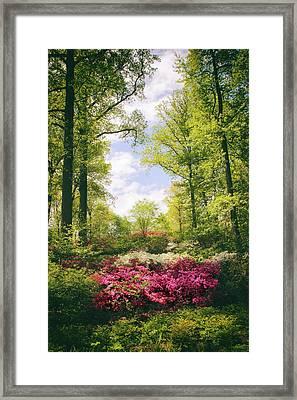 Morning Azaleas Framed Print by Jessica Jenney