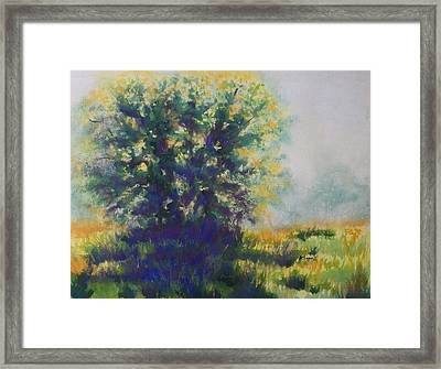 Morning Backlight Framed Print