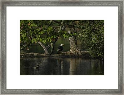 Morning Bath Framed Print by Everet Regal