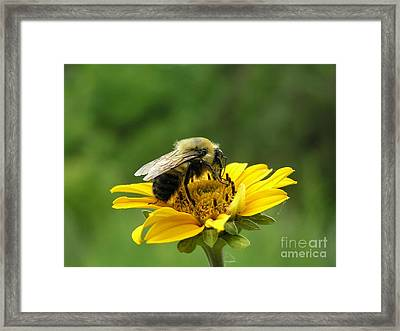 Morning Bee Framed Print