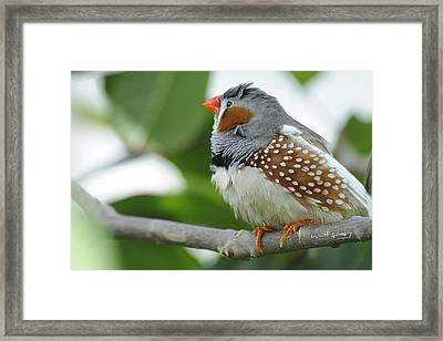 Morning Bird Framed Print