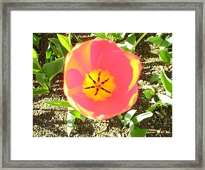 Framed Print featuring the photograph Morning Blossom by Kicking Bear  Productions