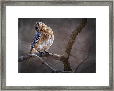 Morning Bluebird Song Framed Print by Bill Tiepelman