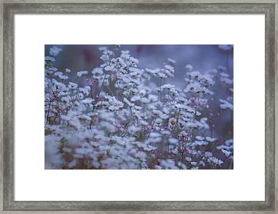 Morning Blues  Framed Print by Bulik Elena