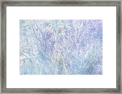 Morning Blues Of Wild Flowers Framed Print
