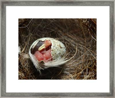 Morning Breaks II Framed Print by Jan Piller