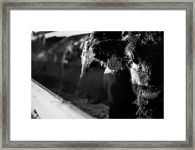 Morning Breath Framed Print by Thomas Zimmerman