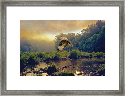 Framed Print featuring the photograph Morning Buzzard by Roy  McPeak