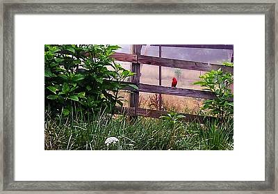 Framed Print featuring the photograph Morning Cardinal by Deb Martin-Webster