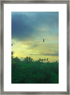 Morning Framed Print by Caroline Benson