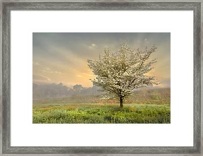 Morning Celebration Framed Print by Debra and Dave Vanderlaan