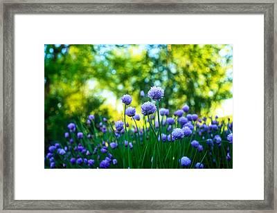Morning Chives Framed Print by Lynn Hopwood