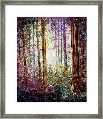 Morning Colors On The Redwoods Framed Print by Laura Iverson