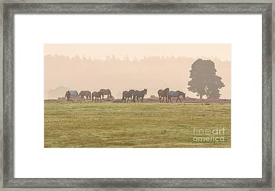 Morning Commute  New Forest Framed Print by Richard Thomas