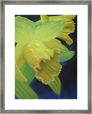 Morning Daffodil Framed Print by Joan Swanson