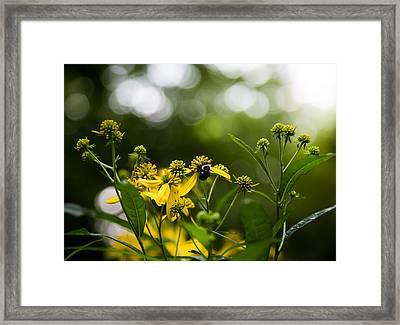 Morning Dazzle Framed Print