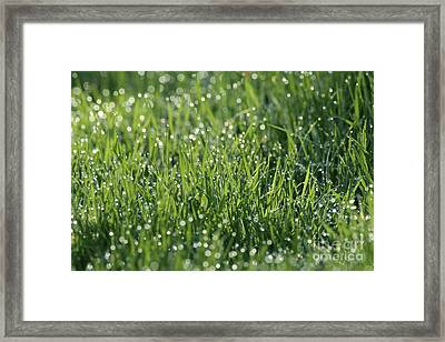 Morning Dew 1 Framed Print