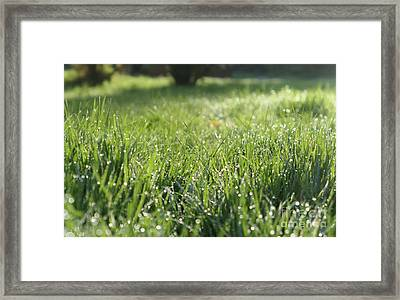 Morning Dew 2 Framed Print