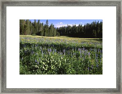 Morning Dew - Blackrock Framed Print by Soli Deo Gloria Wilderness And Wildlife Photography