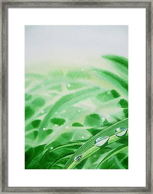 Morning Dew Drops Framed Print by Irina Sztukowski