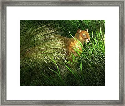Morning Dew - Florida Panther Framed Print
