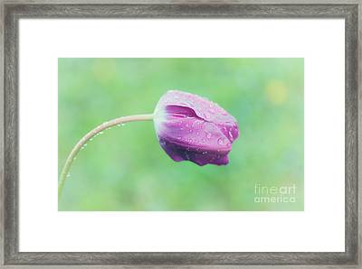 Morning Dew Framed Print by Janet Burdon