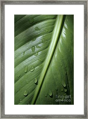 Morning Dew Framed Print by Jeannie Burleson