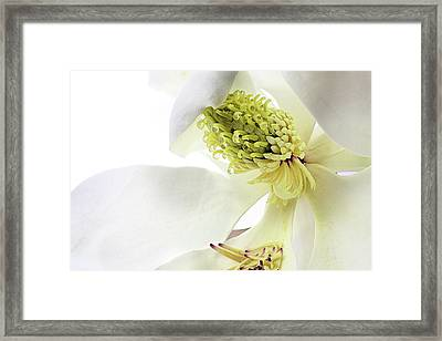 Framed Print featuring the photograph Morning Dew Magnolia by JC Findley