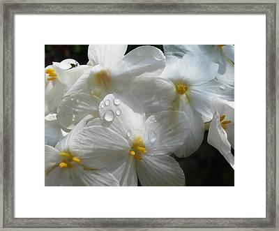 Framed Print featuring the photograph Morning Dew by Martha Ayotte
