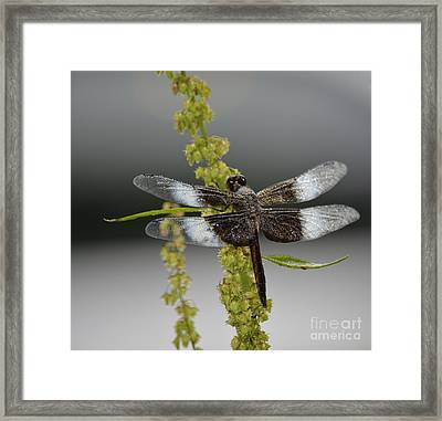 Framed Print featuring the photograph Morning Dew by Randy Bodkins