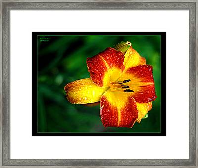 Morning Dew Framed Print by William Bray