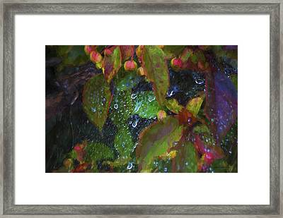 Morning Dewdrops  Framed Print