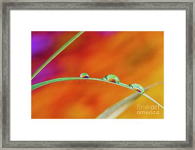 Morning Dewdrops II Framed Print