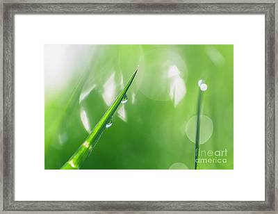 Morning Dewdrops IIi Framed Print