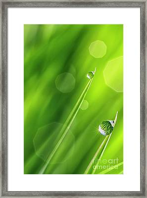 Morning Dewdrops Iv Framed Print