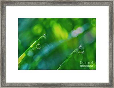Morning Dewdrops V Framed Print