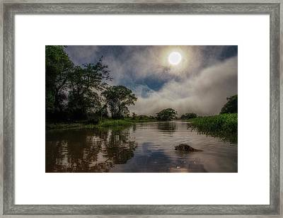 Framed Print featuring the photograph Morning Dip by Wade Aiken