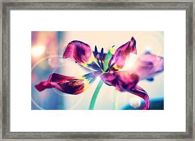 Morning Dream  Framed Print