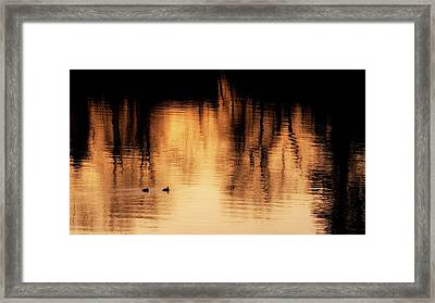 Framed Print featuring the photograph Morning Ducks 2017 by Bill Wakeley