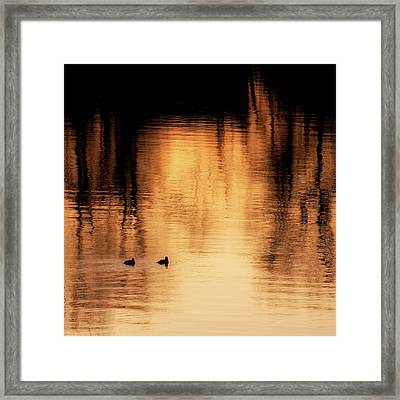 Framed Print featuring the photograph Morning Ducks 2017 Square by Bill Wakeley